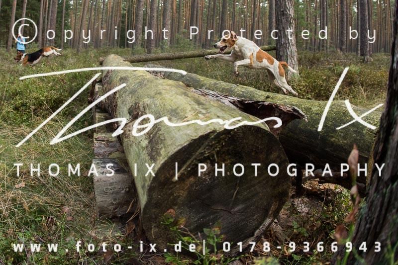 Dateiname: 2012_09_09_Jagd_Gartow-092 - Bild  82 von 319 in der Galerie - höchste verfügbare Auflösung: 3491 x 2327 px