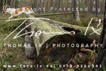 2012_09_09_Jagd_Gartow-094.jpg