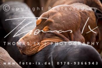 2015_03_13_Jagd_Rehrhof-044.jpg