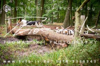 2015_08_16_Jagd_Schnellenberg-078.jpg