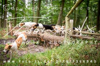 2015_08_16_Jagd_Schnellenberg-083.jpg
