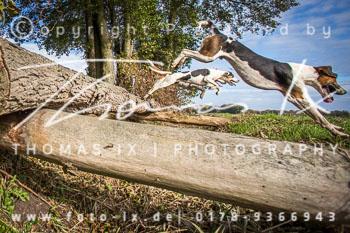 2015_10_25_Jagd_Grabow-030.jpg
