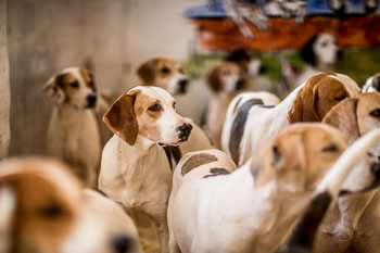 2016_02_26_Walking_the_hounds_Moen-011.jpg