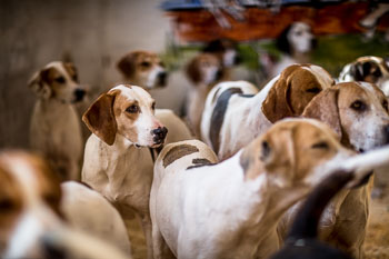 2016_02_26_Walking_the_hounds_Moen-012.jpg