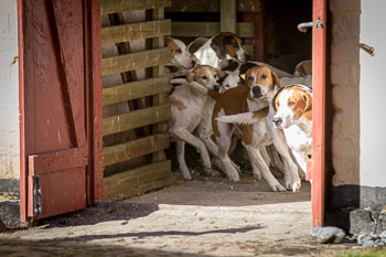 2016_02_26_Walking_the_hounds_Moen-022.jpg