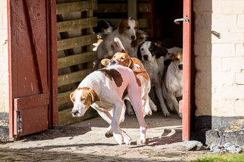 2016_02_26_Walking_the_hounds_Moen-023.jpg