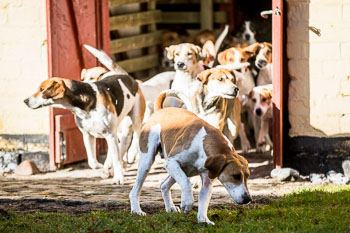 2016_02_26_Walking_the_hounds_Moen-024.jpg