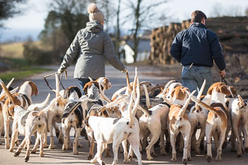 2016_02_26_Walking_the_hounds_Moen-039.jpg