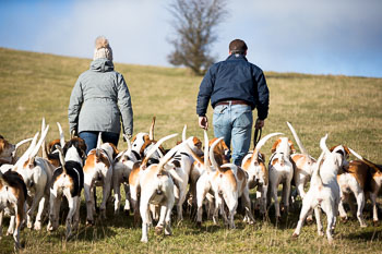 2016_02_26_Walking_the_hounds_Moen-042.jpg