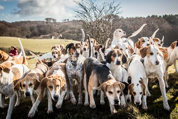 2016_02_26_Walking_the_hounds_Moen-050.jpg