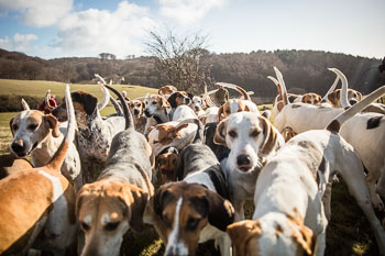 2016_02_26_Walking_the_hounds_Moen-051.jpg