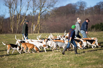 2016_02_26_Walking_the_hounds_Moen-052.jpg