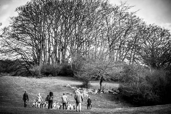 2016_02_26_Walking_the_hounds_Moen-075.jpg