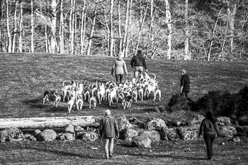 2016_02_26_Walking_the_hounds_Moen-076.jpg