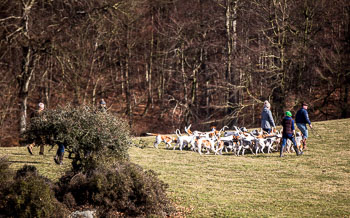 2016_02_26_Walking_the_hounds_Moen-077.jpg