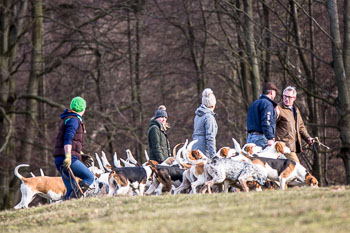 2016_02_26_Walking_the_hounds_Moen-078.jpg