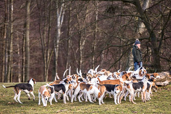 2016_02_26_Walking_the_hounds_Moen-079.jpg
