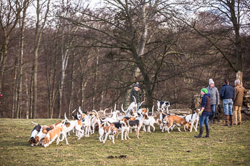 2016_02_26_Walking_the_hounds_Moen-080.jpg