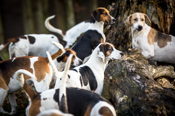 2016_02_26_Walking_the_hounds_Moen-081.jpg