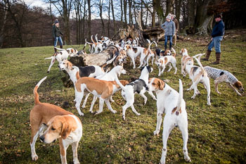 2016_02_26_Walking_the_hounds_Moen-083.jpg