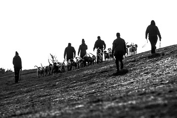 2016_02_26_Walking_the_hounds_Moen-087.jpg