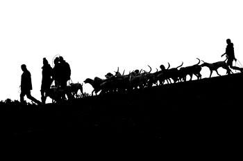 2016_02_26_Walking_the_hounds_Moen-089.jpg
