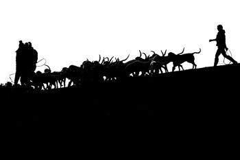 2016_02_26_Walking_the_hounds_Moen-090.jpg