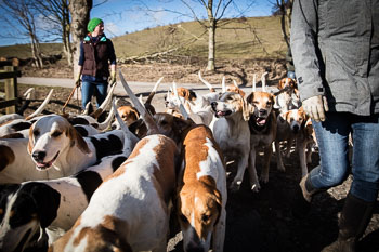 2016_02_26_Walking_the_hounds_Moen-097.jpg