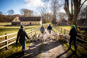 2016_02_26_Walking_the_hounds_Moen-099.jpg