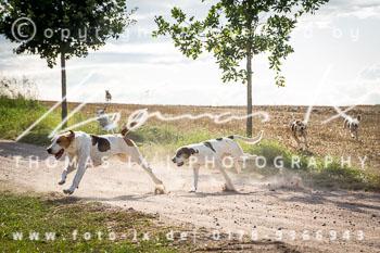 2017_09_03_Jagd_Kleefeld-054.jpg