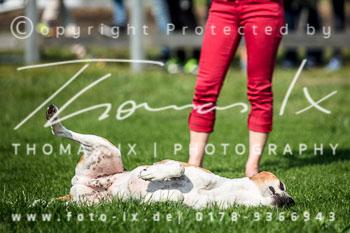2017_09_04_Hundearbeit_NM_Norderney-031.jpg