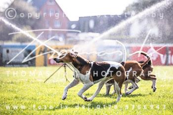 2017_09_04_Hundearbeit_NM_Norderney-035.jpg
