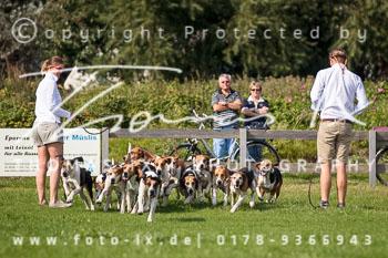 2017_09_04_Hundearbeit_NM_Norderney-038.jpg