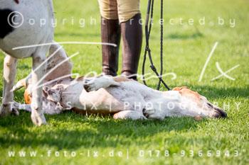 2017_09_04_Hundearbeit_NM_Norderney-050.jpg