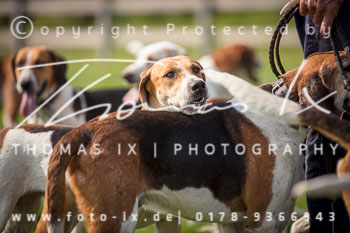 2017_09_04_Hundearbeit_NM_Norderney-057.jpg