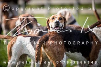 2017_09_04_Hundearbeit_NM_Norderney-058.jpg