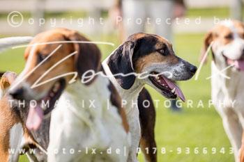 2017_09_04_Hundearbeit_NM_Norderney-064.jpg