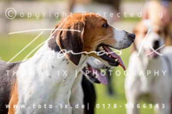 2017_09_04_Hundearbeit_NM_Norderney-065.jpg