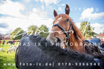2017_09_17_Jagd_Schnellenberg-380.jpg