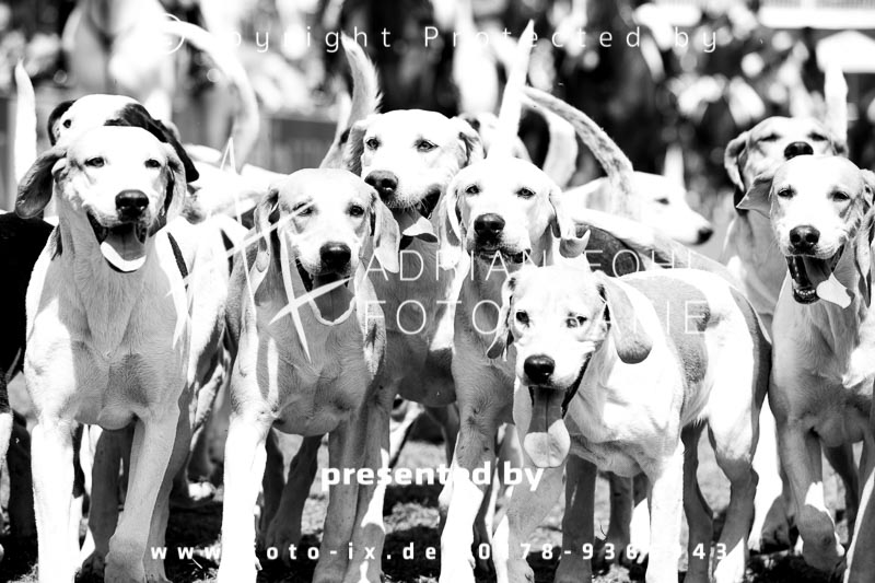 Dateiname: 2018_05_13_HSJV_Derby_Fohl-016 - Bild  34 von 172 in der Galerie - höchste verfügbare Auflösung: 3000 x 2000 px